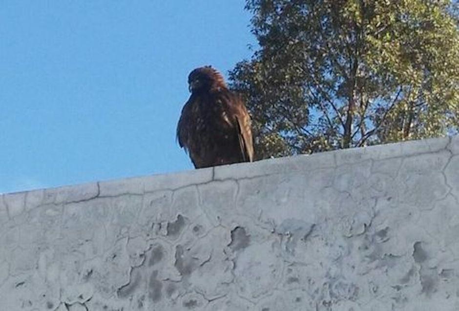 águila, Línea 12 del Metro Tláhuac