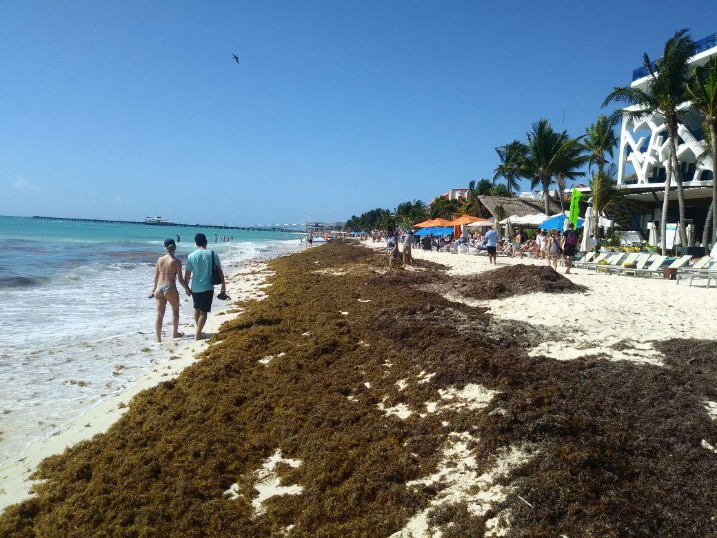 ¿Por qué el sargazo amenaza las playas mexicanas?