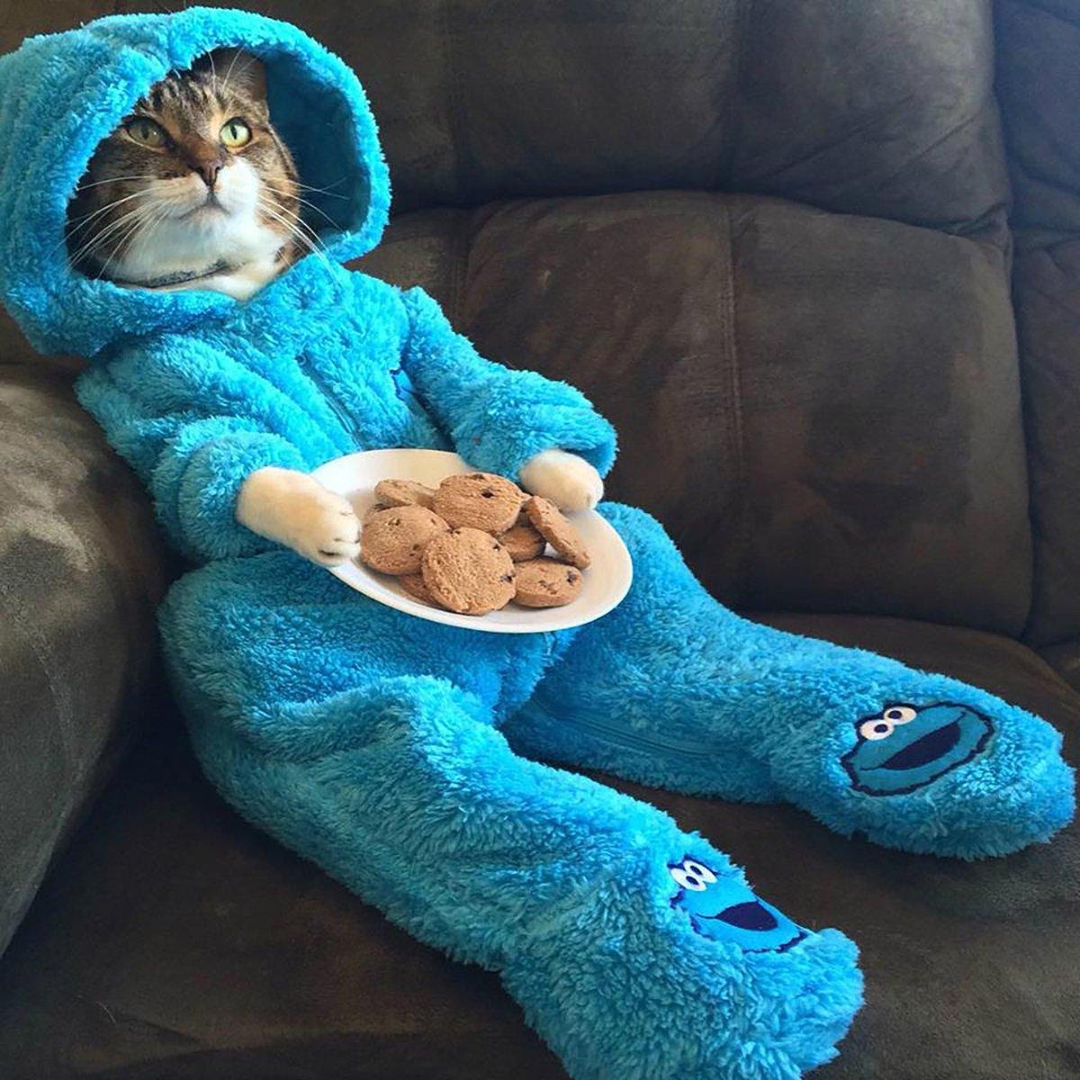 Departamento de Estado envió foto de gatito en vez de correspondencia oficial