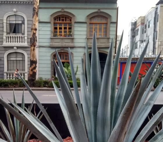 En colonias de CDMX, rentan más extranjeros que mexicanos