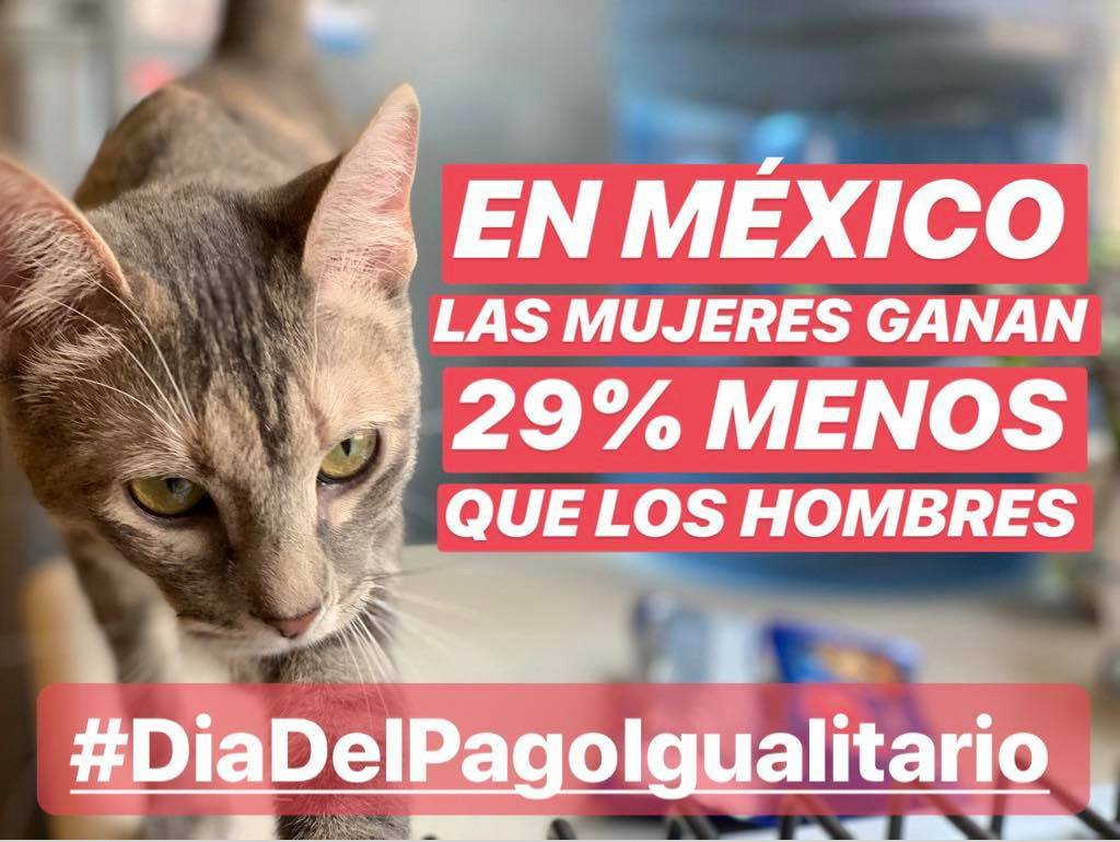 Entrevista a Gatitos contra la desigualdad por Día del Pago Igualitario