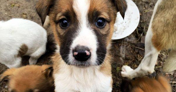 Chérnobil pone en adopción lomitos híbridos de lobo y perro