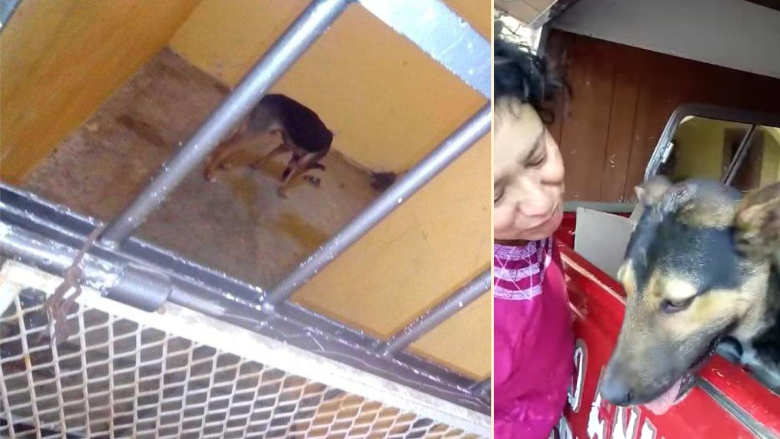 Alcalde de Oaxaca encarcela a perro. Organizaciones logran liberarlo