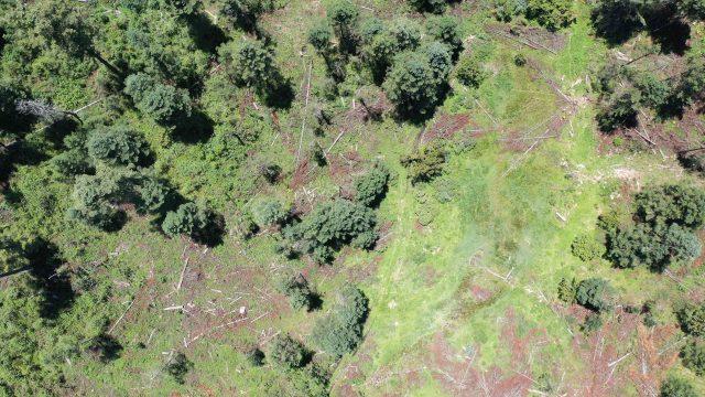 Persiguen a defensores de los bosques de Estado de México