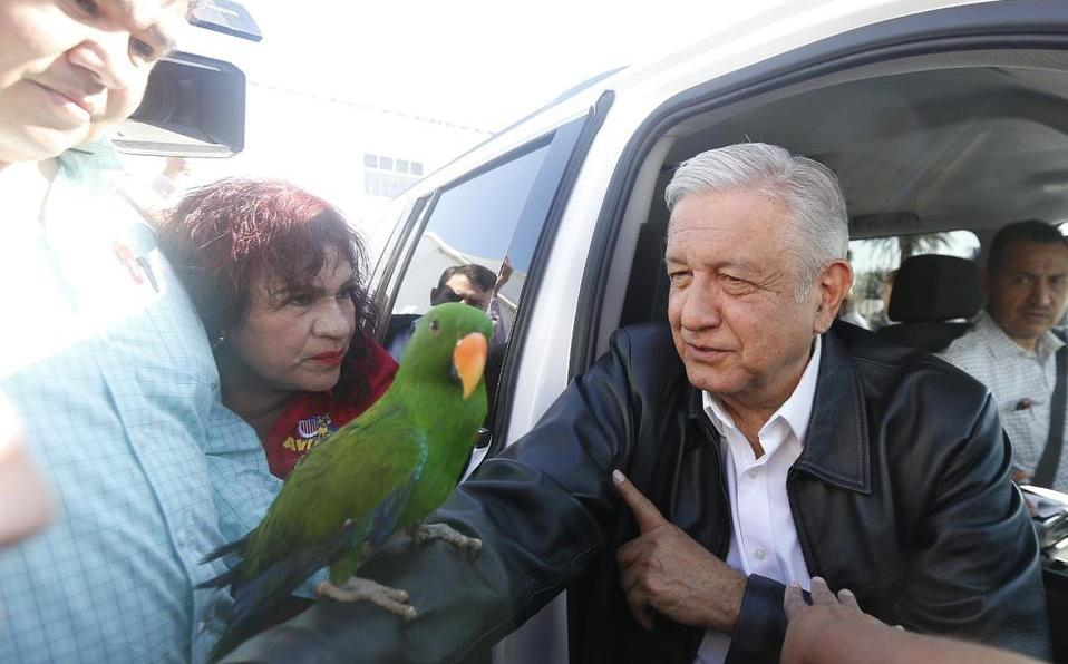 Mujer regala perico a presidente AMLO en Coahuila; lo adopta